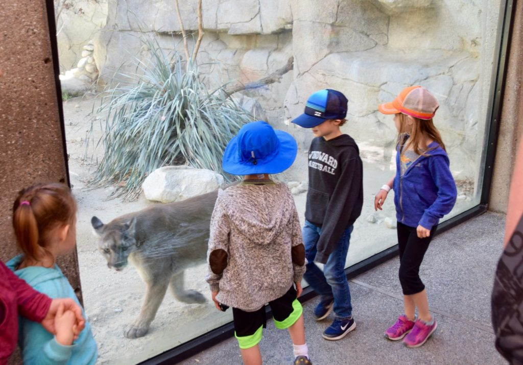 The Living Desert is a Zoo Like No Other