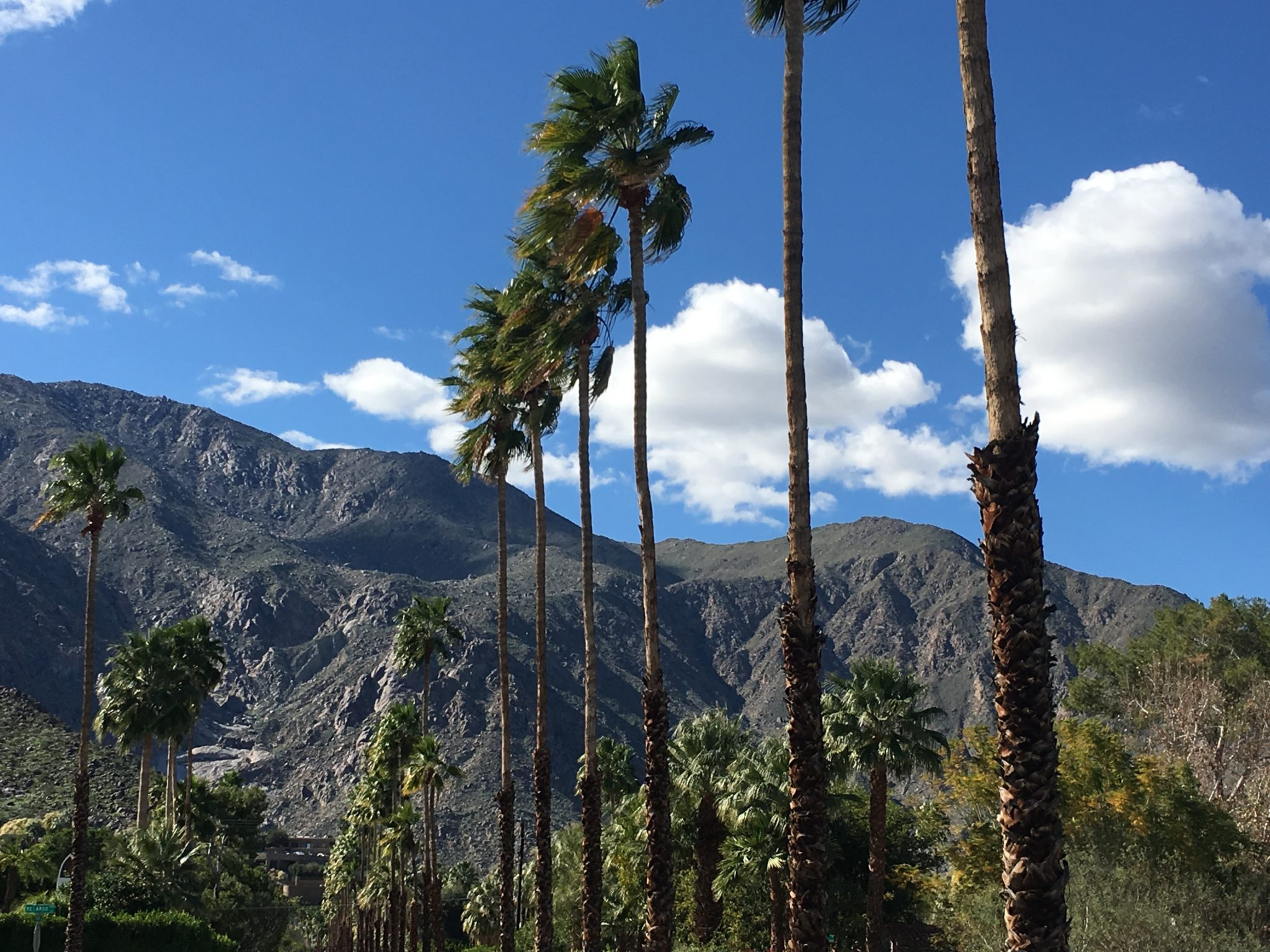 5 Things to Do in Palm Springs Shade