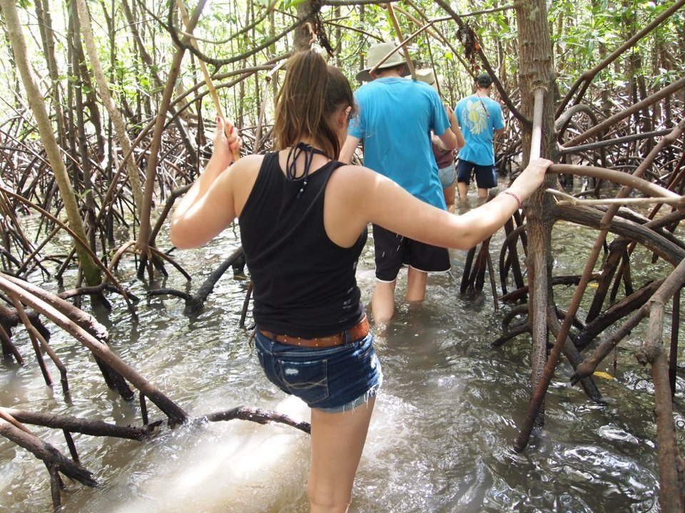 Aboriginal walk through mangrove forest