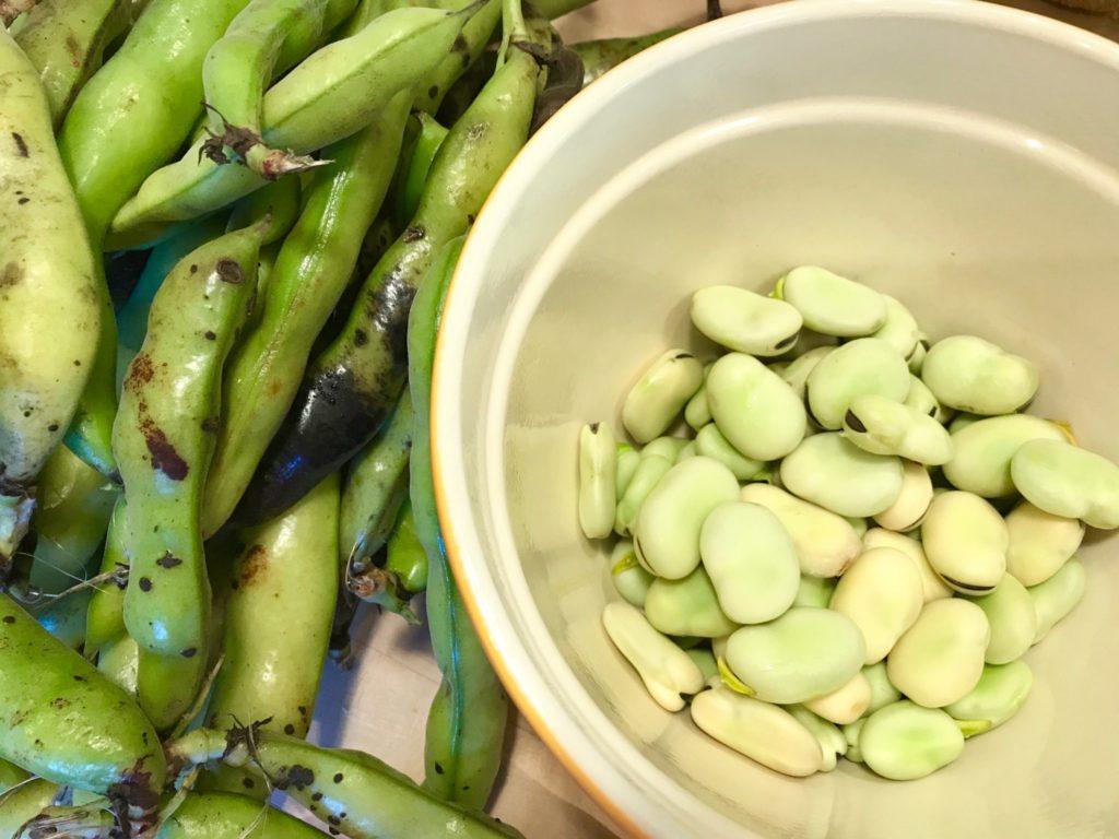 shelled fava beans