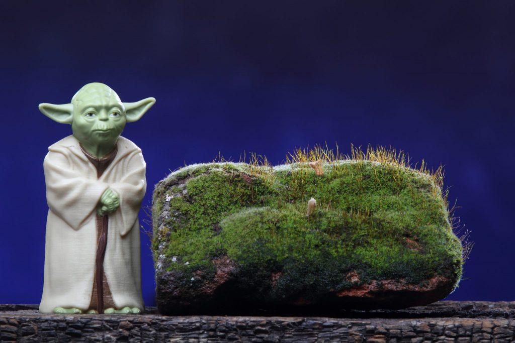 Yoda a wise Jedi