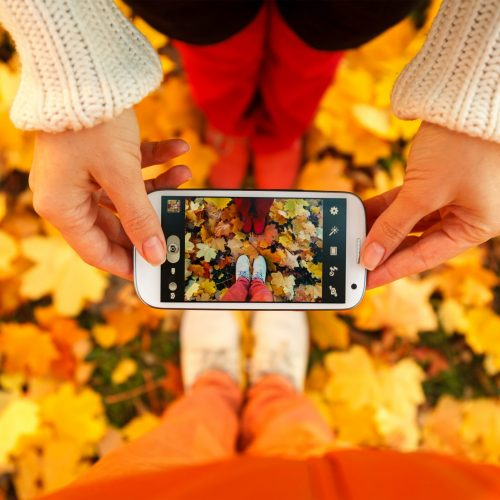 fall leaves and photo shoot