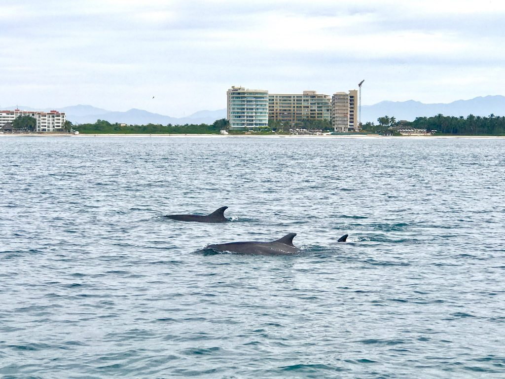 swimming with dolphins Puerto Vallarta