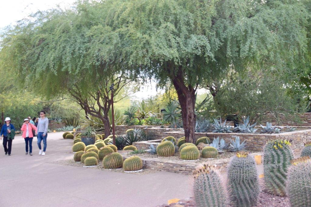 landscaped cactus garden Desert Botanical Garden Phoenix Arizona