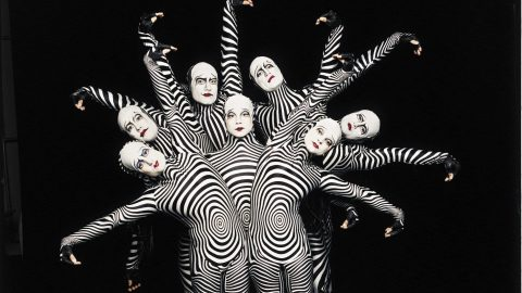 "Zebras ""O"" Cirque de Soleil Las Vegas"