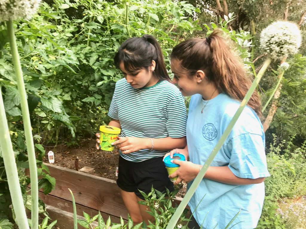 girls releasing natural bug pesticides into garden
