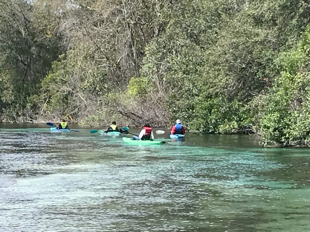 View of Weeki Wachee River from Pontoon Tour