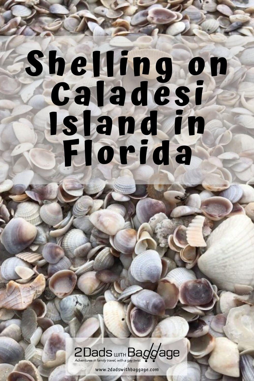 Shelling on Caladesi Island in Florida