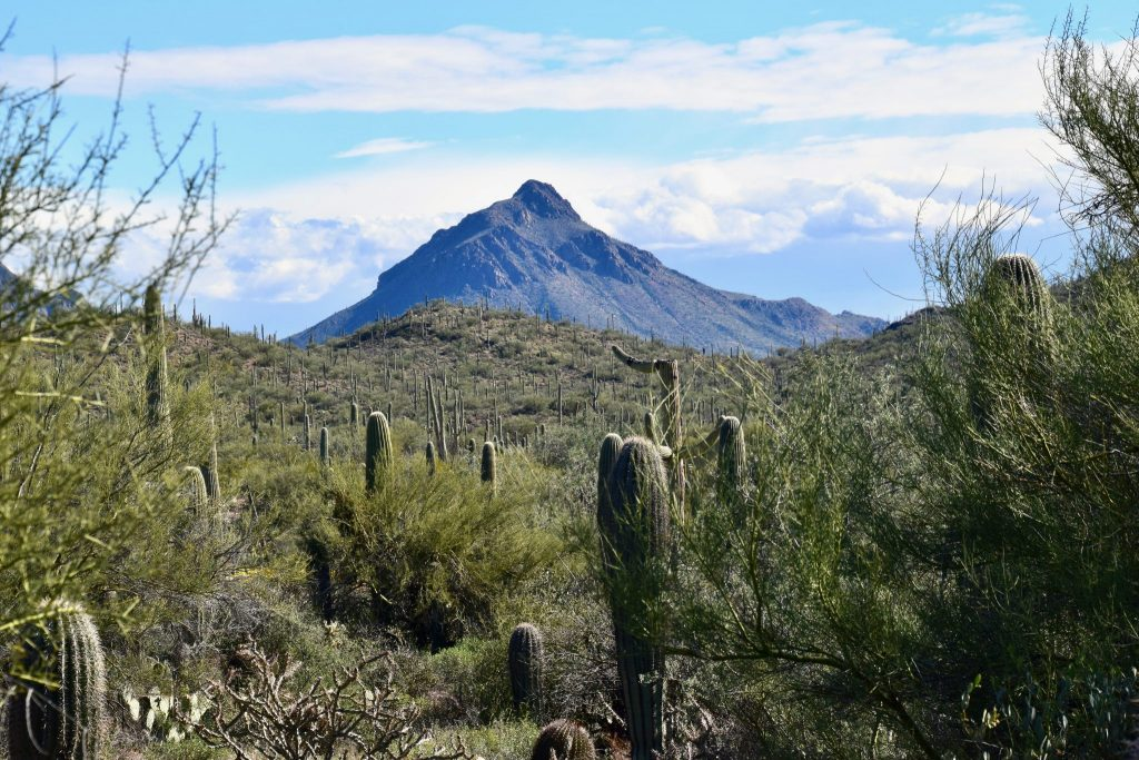 mountains and cactus in Tucson, Arizona