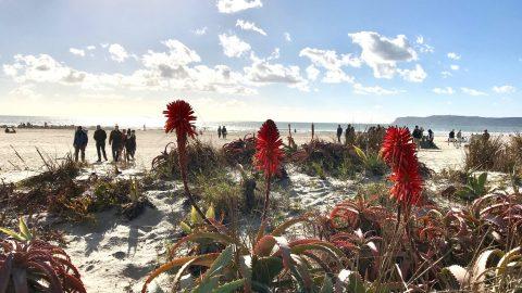 beach near Hotel Del Coronado