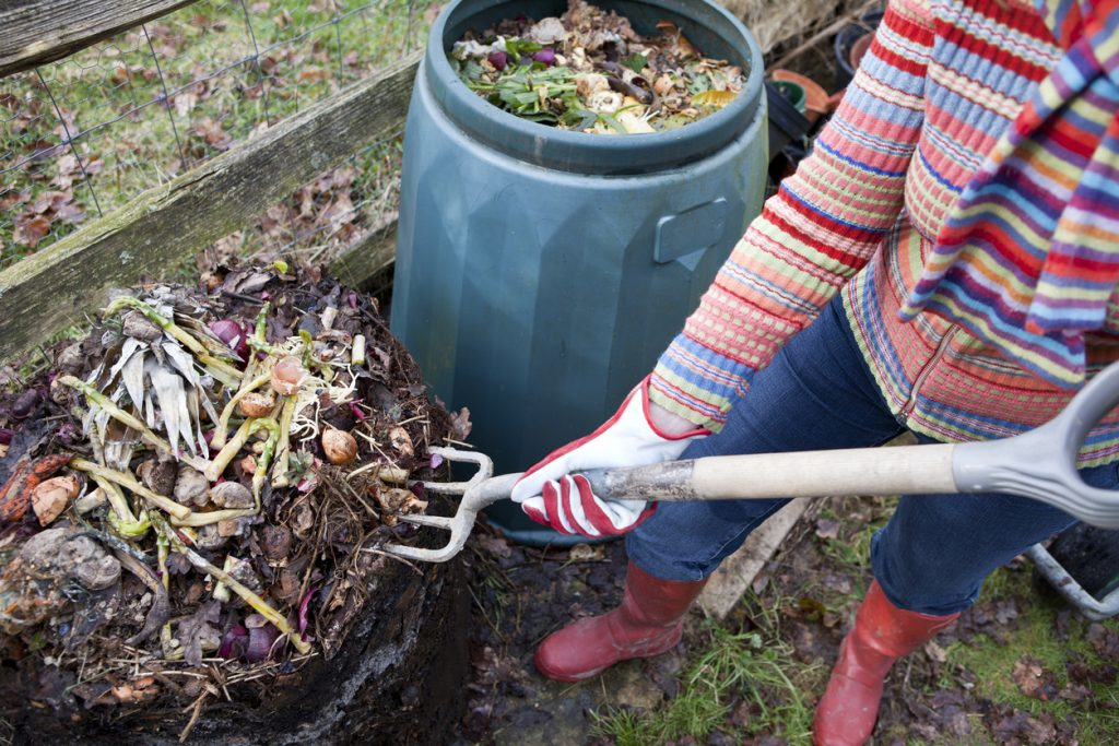 Woman gardener using garden fork to first remove uncomposted food waste from top of composting bin pile, before spreading the compost below onto a vegetable garden.