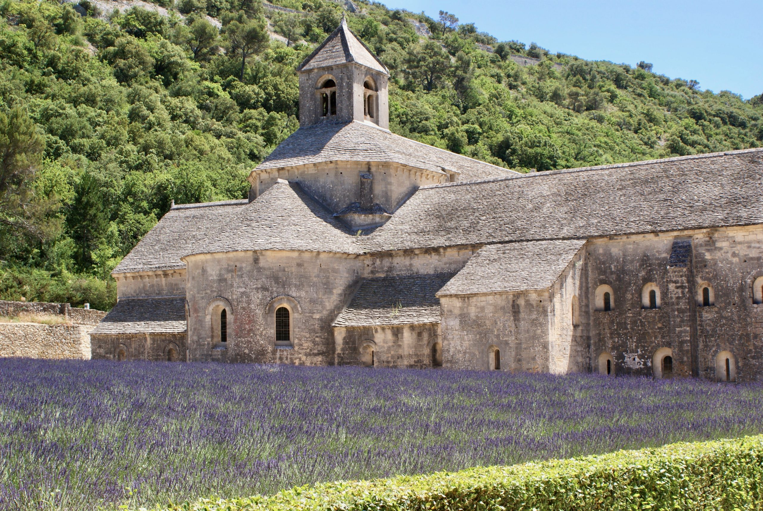 Sénanque Abbey is famous for lavender fields in the South of France
