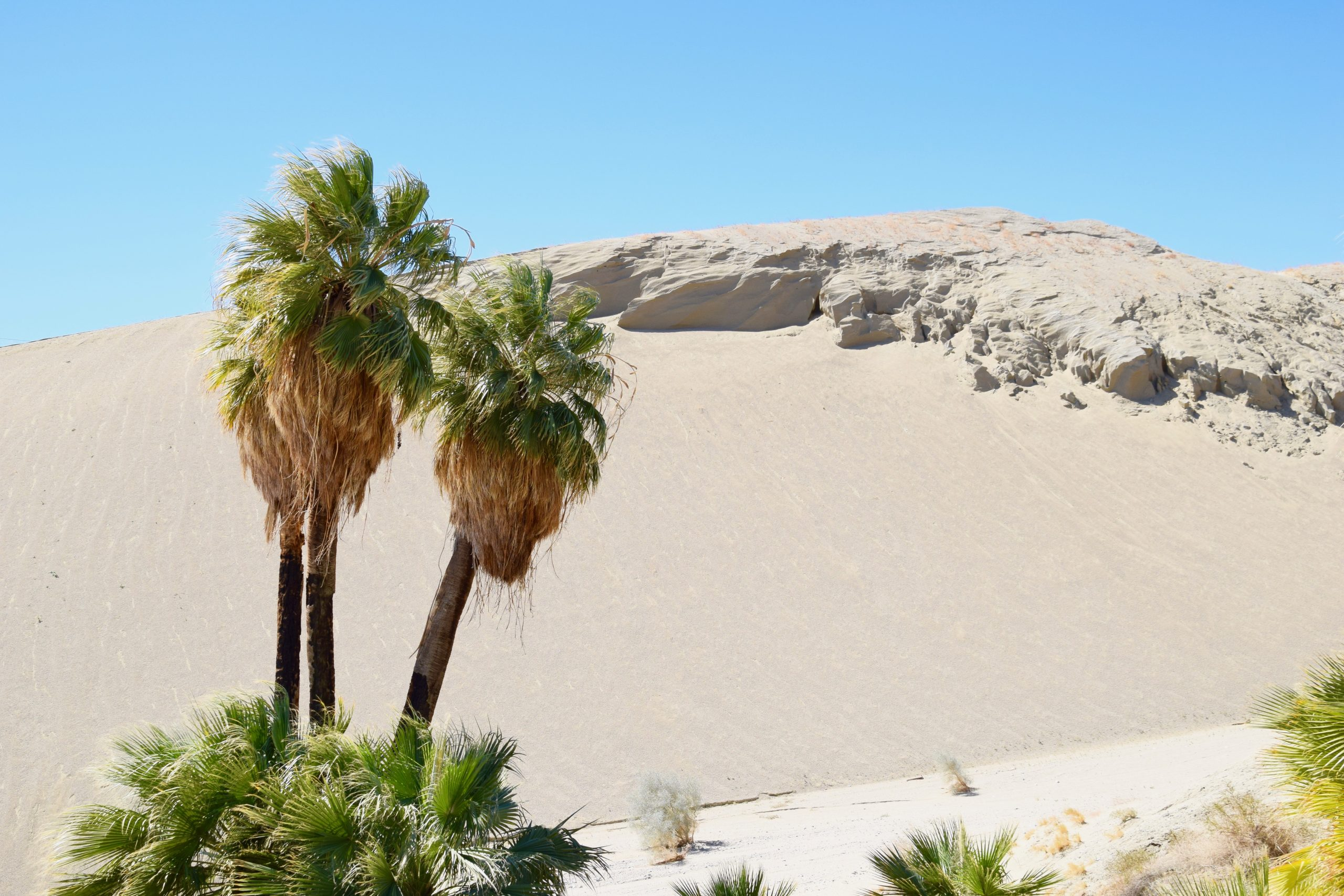 Desert sand dunes with palm trees and blue sky in Palm Springs, CA