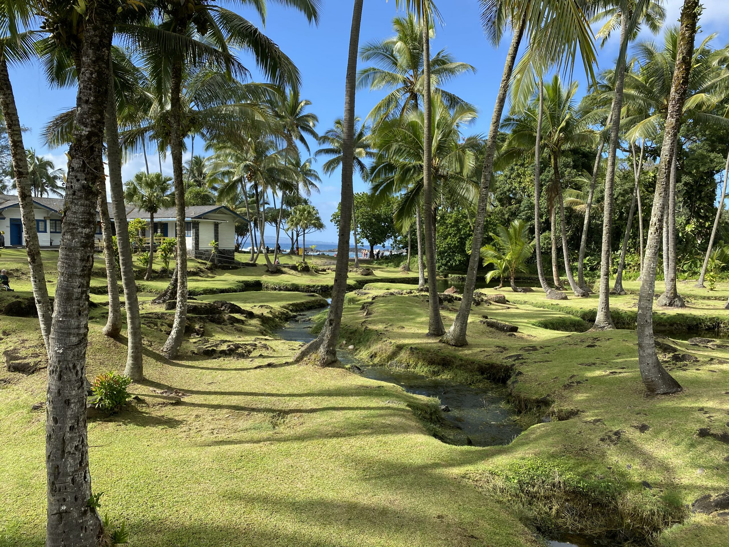 Coconut grove and stream with green grassy mounds near Richardson Beach Park in Hilo, Hawaii