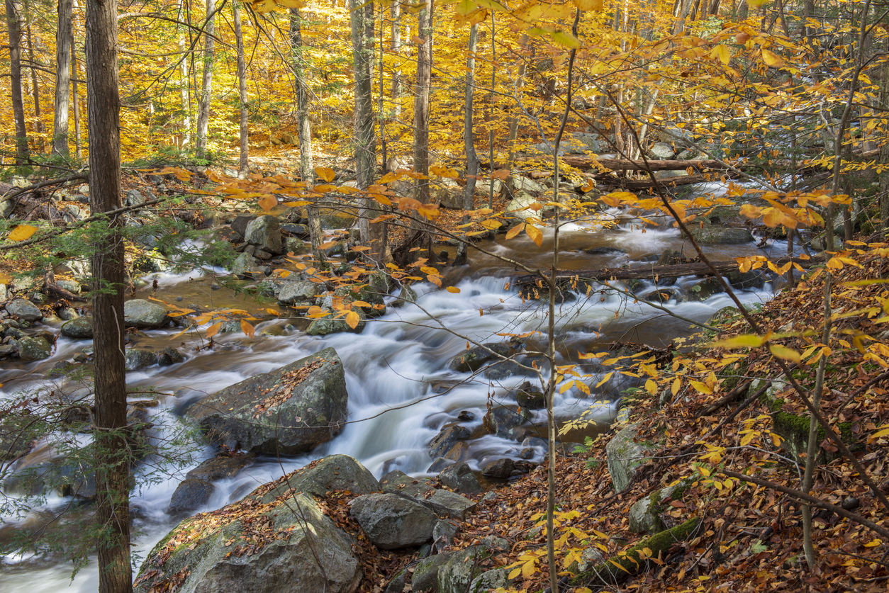 Forest in Autumn in Harriman State Park, New York, USA