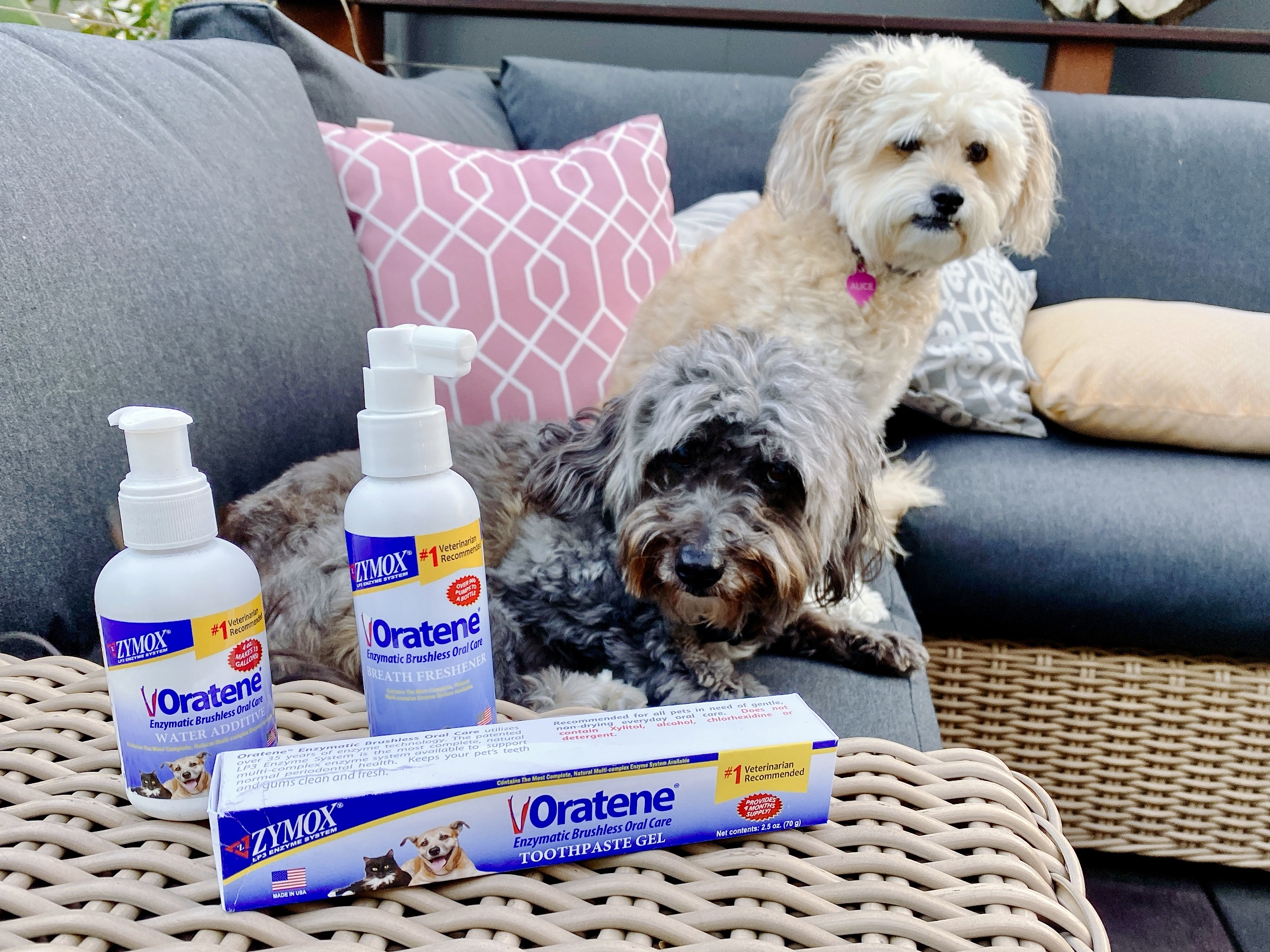 Two small fluffy dogs pose with Oratene dog dental care products