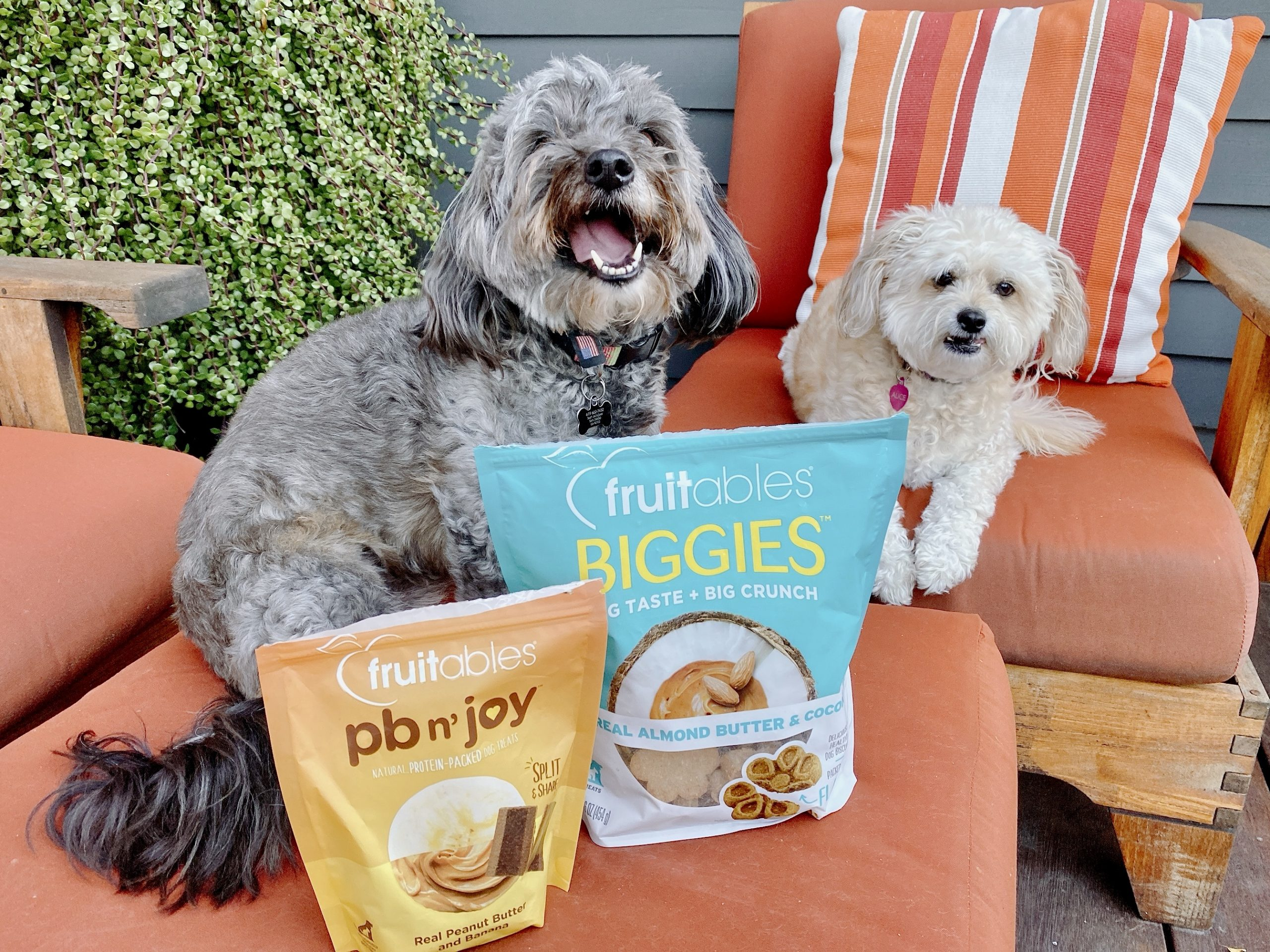 two dogs pose on orange outdoor chairs with bags of dog treats from fruitables