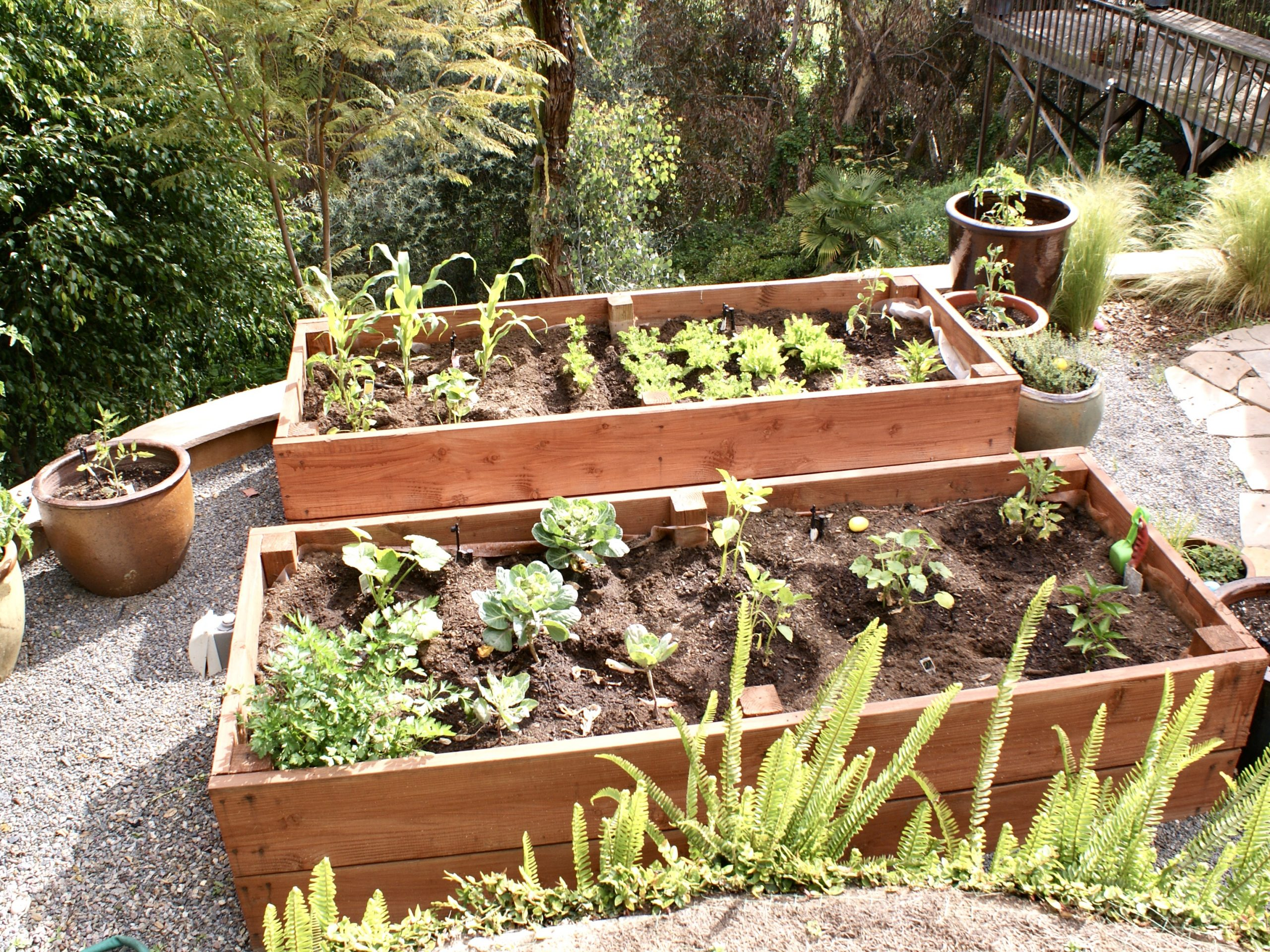 How To Create A Raised Garden Bed for Growing Veggies